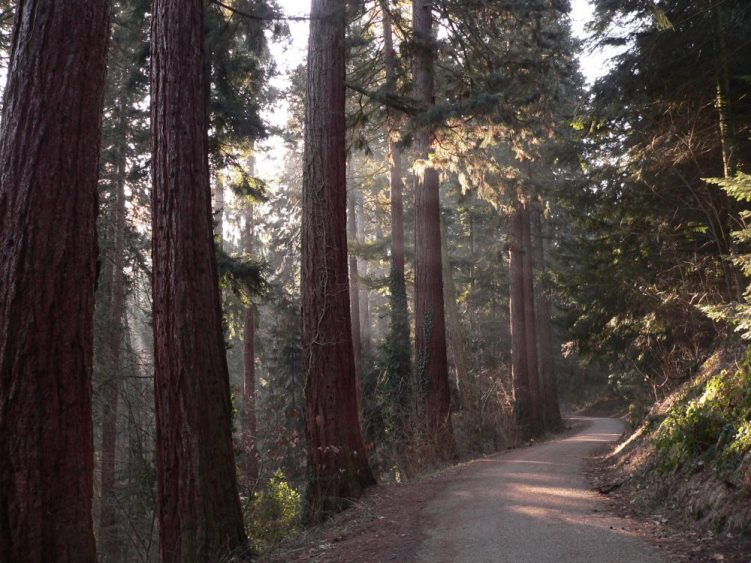 Waldweg im Exotenwald
