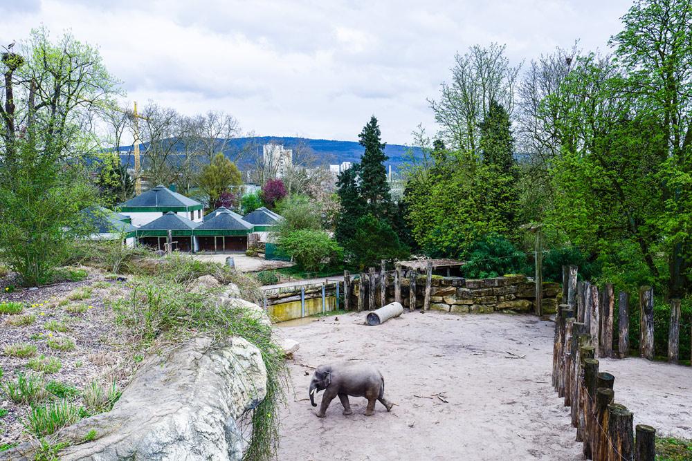 Zoo-HD_Außen_Foto-VRRN_Claus-Geiss