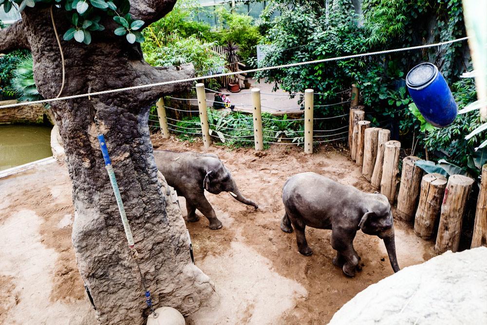 Zoo-HD_Innen_Foto-VRRN_Claus-Geiss