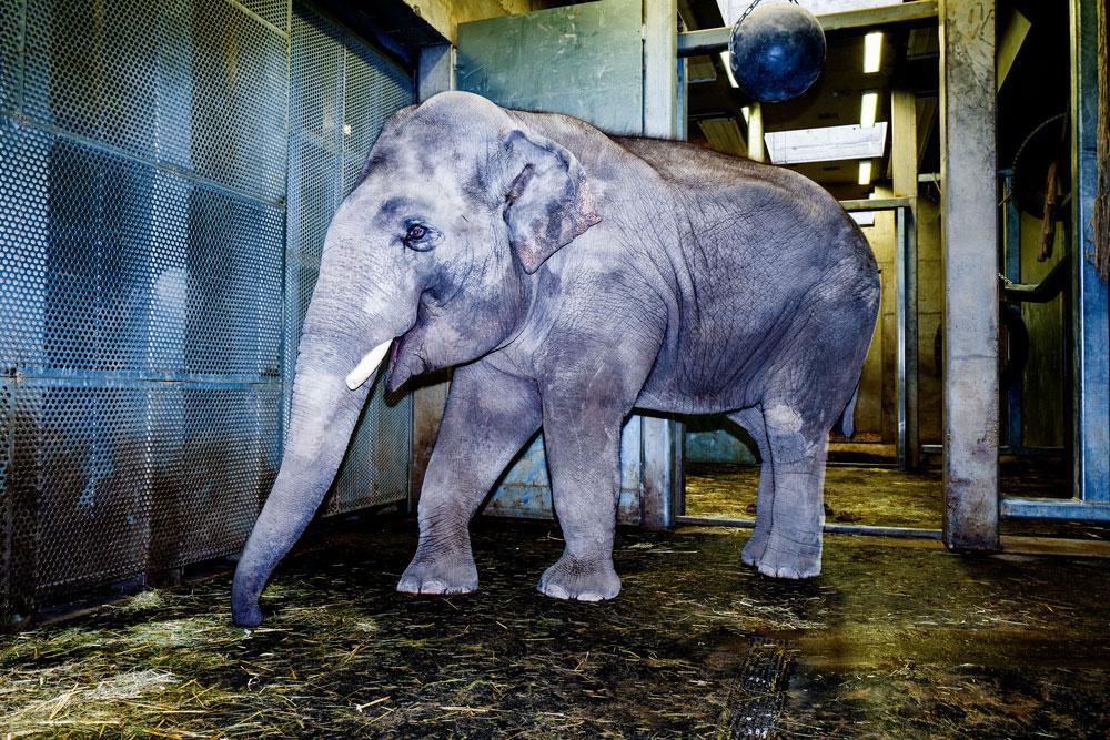 Zoo_HD_Elefant_Foto-Claus-Geiss
