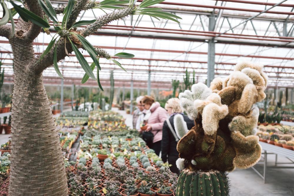 Kaktus Küche | Stacheln Zum Verlieben Wo Sonst